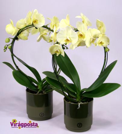 Virágposta - Tavaszi orchideák