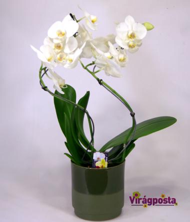 Virágposta - Csavargó orchideák
