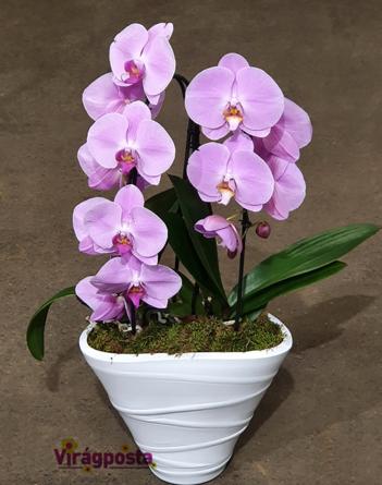 Bailey's - Orchidea Magna