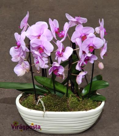 Virágposta - Orchideák Óriás csónak kerámiában