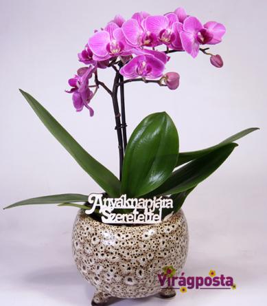 Virágposta - Anyák napi orchidea kerámia gömbben