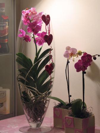 Virágposta - A neve: Vanda! - különleges cserepes orchidea