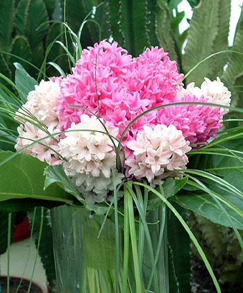 Virágposta - Illatos jácint csokor