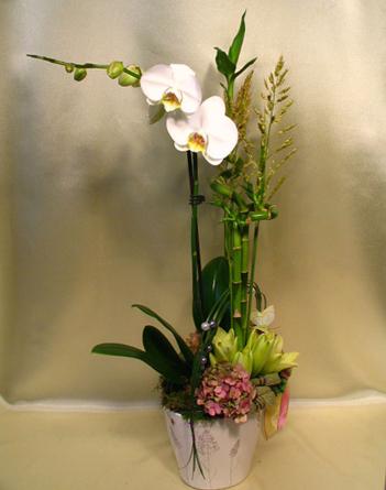 Virágposta - Orchidea nyári virágdíszben