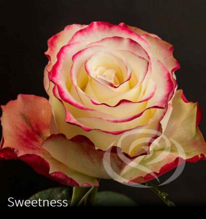 Virágposta - Sweetness - Rózsacsokor Virágküldés