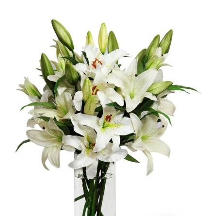 Virágposta - Fehér királyliliomok