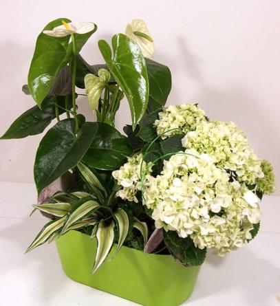Virágposta - Összeültetés fehér anthúriummal és hortenziával