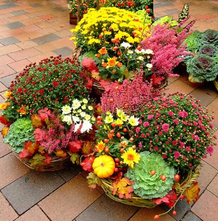 Virágposta - Őszies dekoráció üzletek, éttermek bejáratához
