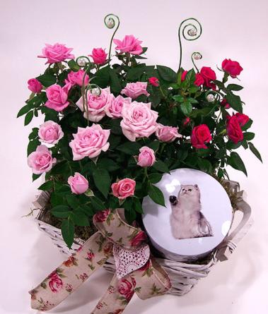 Virágposta - Anya rózsakertje