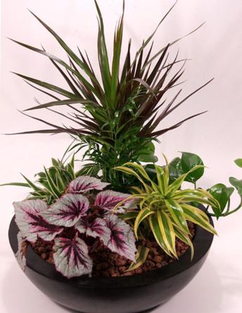 Virágposta - Asztali oázis - növényösszeültetés