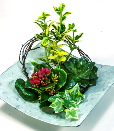 Virágposta - Hello, Napfény! - Összeültetés fém tálban