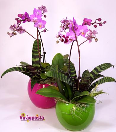Virágposta - Orchideák gömb kaspóban - különleges összeültetés