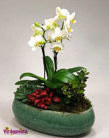 Virágposta - Orchidea összeültetés ovális türkiz tálban