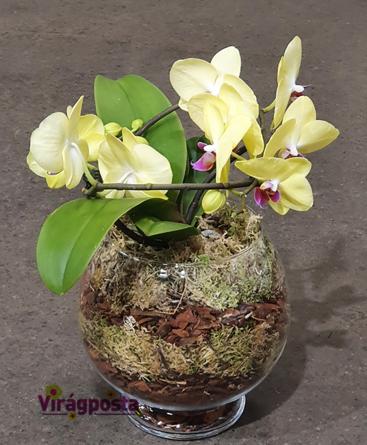 Virágposta - Orchideák üvegkehelyben