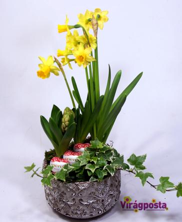Virágposta - Édes és szépséges - összeültetés, nárcisszal, jácinttal és finom csokiszívekkel